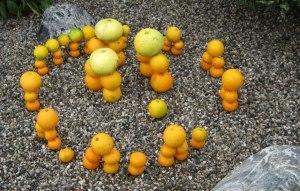 Citrus henge, courtesy of champion henger, Simon Burrow